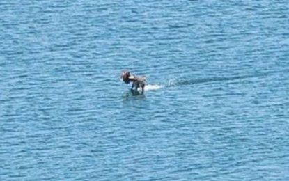 Нещо изплува в Бургаския залив