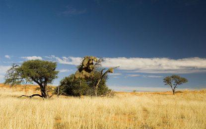 Ботсвана пусна фракинг за шистов газ в национален парк