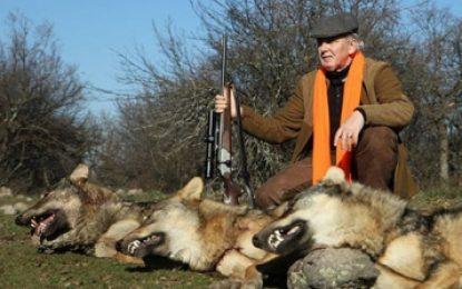 Местан отстреля три вълка