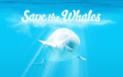 Гледай порно, спаси кит