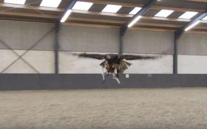 Орли срещу дронове в Холандия