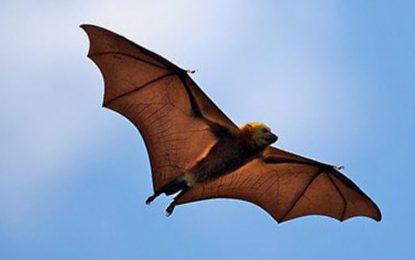 Прилепите учат дроновете да летят