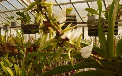Изложба на орхидеи до 26 март в Ботаническата градина на БАН