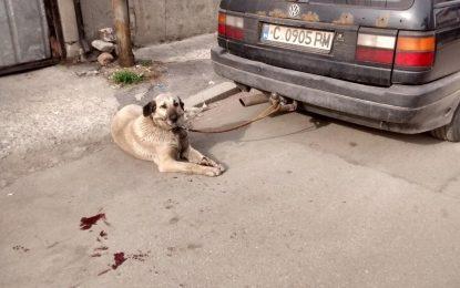 Мъж спаси куче от стопанина му. Aрестуваха го, садиста – не