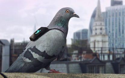 Гълъби борят мръсния въздух в Лондон