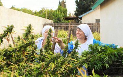 Сестрите от долината… на тревата