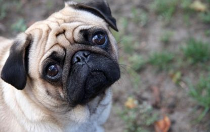 Куче нацист вкара стопанина си в ареста