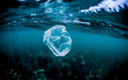 Пластмасовите ни отпадъци са бърза храна за рибите