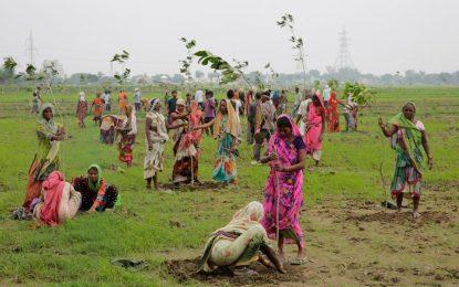 Индия засади 50 милиона дървета за 24 часа
