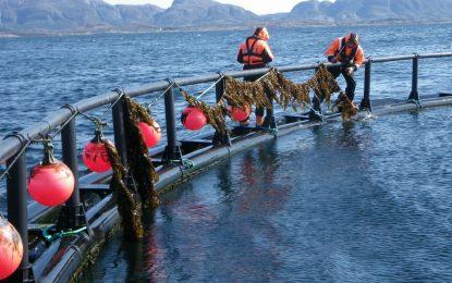 Норвегия пробва да отглежда сьомга на кораб