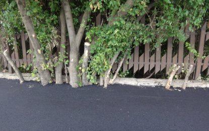 Глобата на Фандъкова за асфалтираните дървета е 2500 лева
