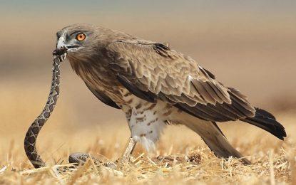 България на съд, защото не пази застрашени птици