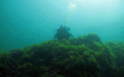 Учени откриха живот в дълбините на Черно море