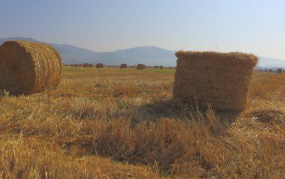 """Зърнарите """"изяждат"""" 75% от европарите за земеделие"""