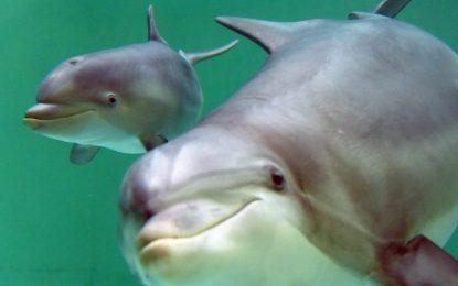Два делфина си говорят…