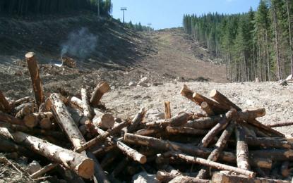 WWF стартира кампания за опазване на Пирин
