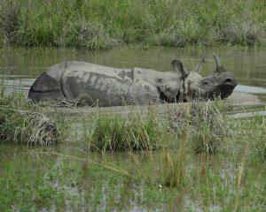 Селфи издаде убийци на носорози